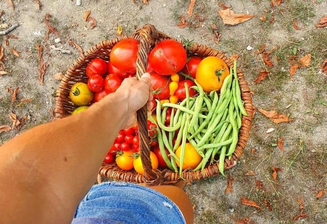 Cesta de verduras de jardín