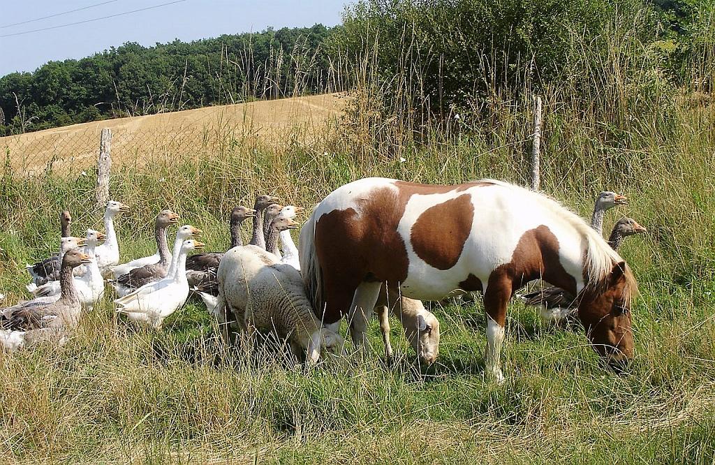 La ferme en Castéra